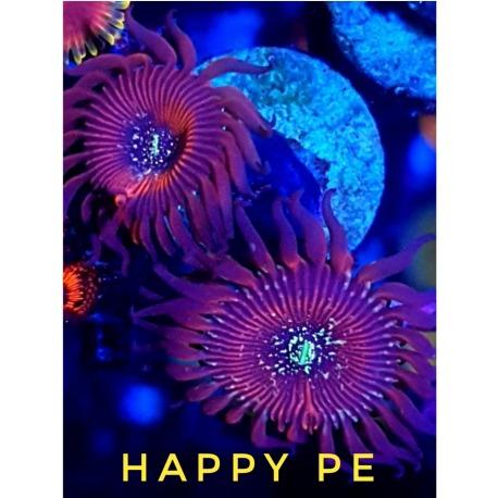 Happy Pe