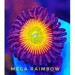 Mega Raimbow
