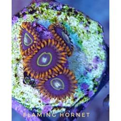 Flaming Hornet