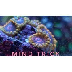 Mind Trick