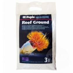 Reef Ground