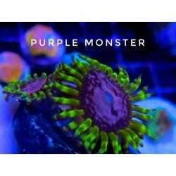 Purple Monster